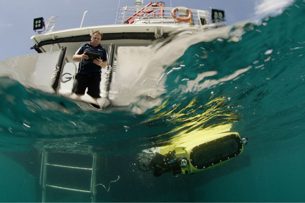 Des robots facilitent la reproduction du corail