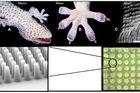 Les pattes de geckos inspirent l'industrie des puces électroniques